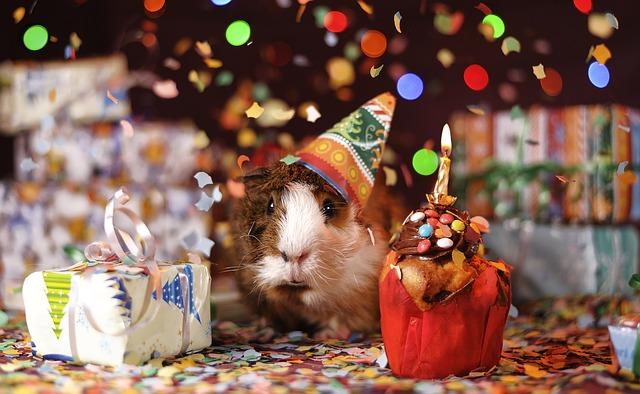 英会話:誕生日に使える英語表現・一人で過ごすと説明