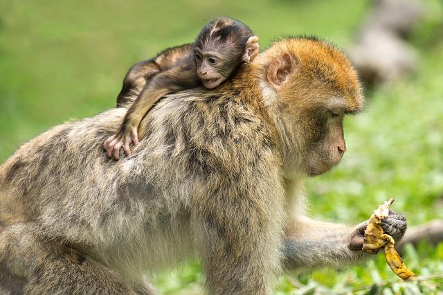 英会話:日本の母の日を英語で説明(Mother's day in Japan)