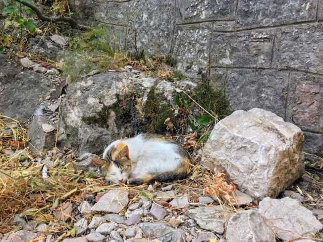 コトル城壁で見つけた猫