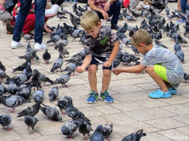 鳩を餌で釣ろうとする少年たち